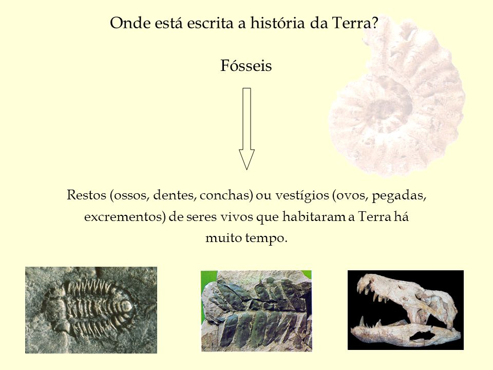 Onde está escrita a história da Terra? Fósseis Restos (ossos, dentes, conchas) ou vestígios (ovos, pegadas, excrementos) de seres vivos que habitaram
