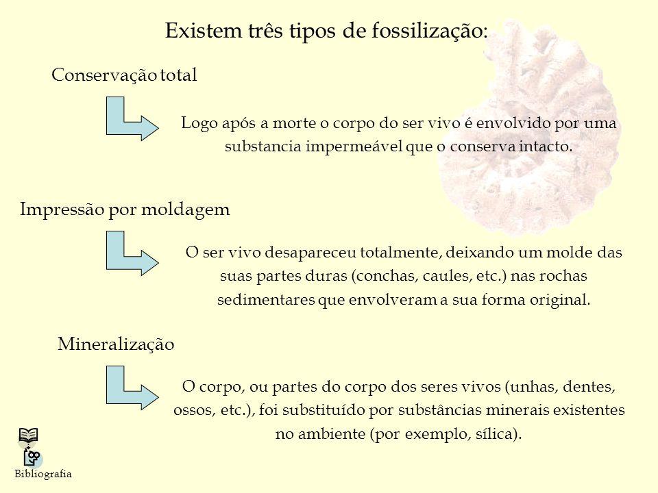 Existem três tipos de fossilização: Conservação total Logo após a morte o corpo do ser vivo é envolvido por uma substancia impermeável que o conserva