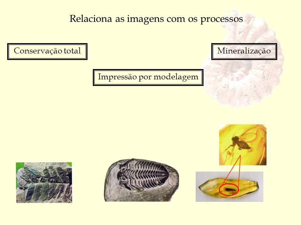Relaciona as imagens com os processos Conservação total Impressão por modelagem Mineralização