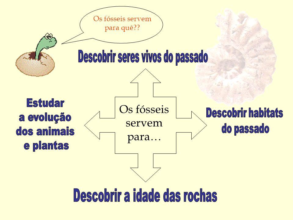 Os fósseis servem para… Os fósseis servem para quê??