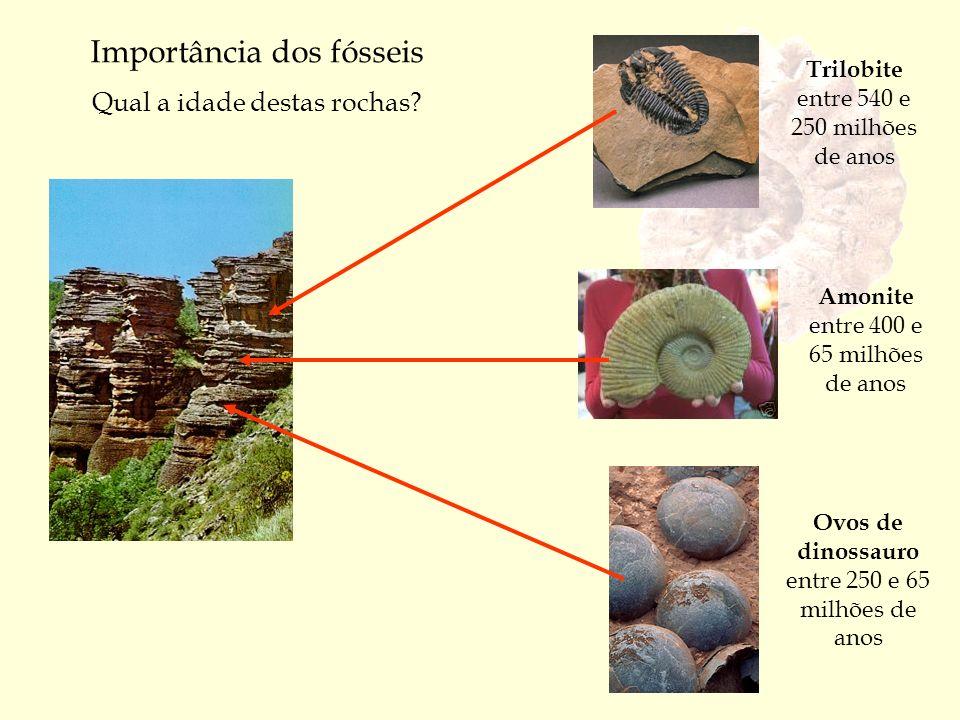 Importância dos fósseis Qual a idade destas rochas? Trilobite entre 540 e 250 milhões de anos Amonite entre 400 e 65 milhões de anos Ovos de dinossaur