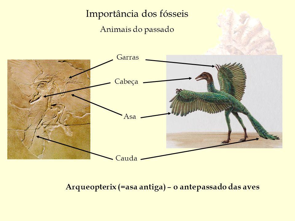 Alguns Fósseis em Portugal Ourém Buçaco Trilobite do Paleozóico Ericeira Sesimbra Pegadas de dinossauros do Jurássico Ouriços do mar do Cretácico Dentes de peixe do Terciário Pegadas de dinossauros do Jurássico Praia Santa