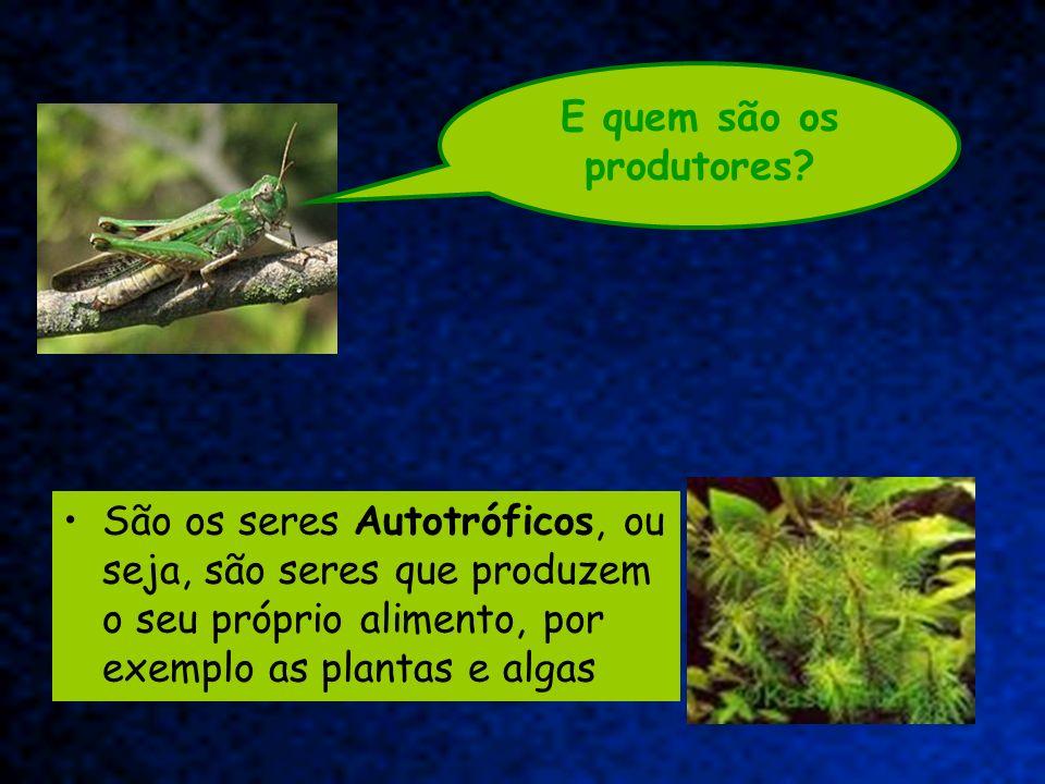 São os seres Autotróficos, ou seja, são seres que produzem o seu próprio alimento, por exemplo as plantas e algas E quem são os produtores?