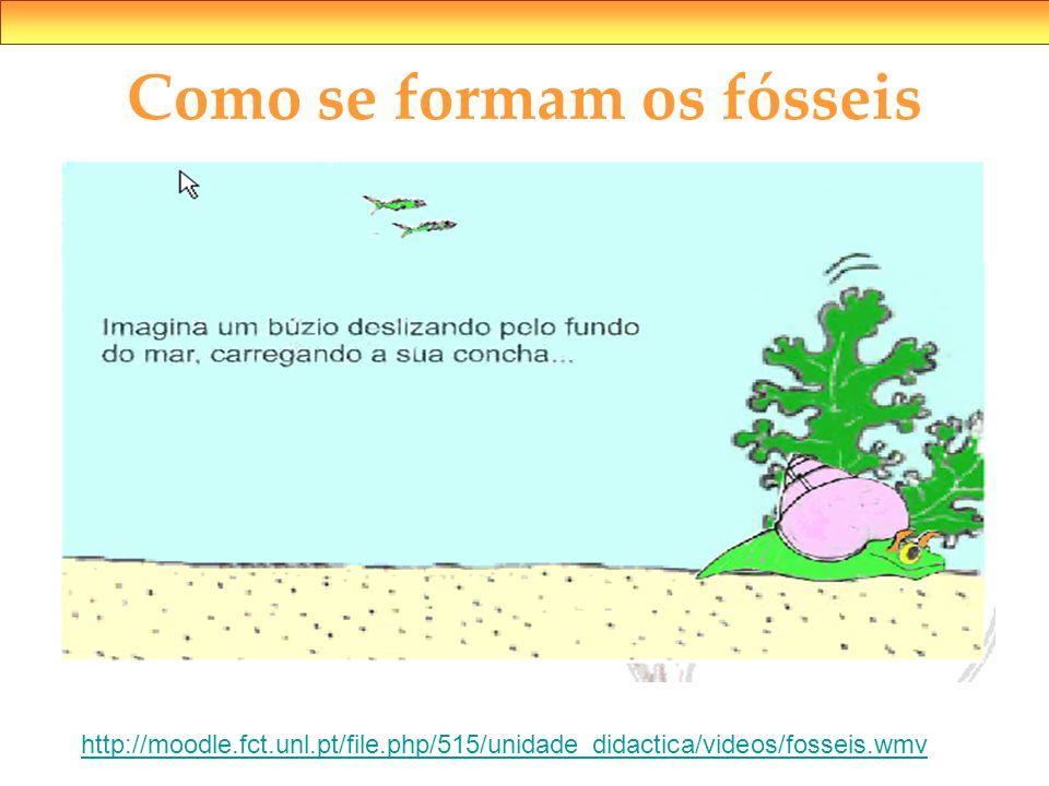 Como se formam os fósseis http://moodle.fct.unl.pt/file.php/515/unidade_didactica/videos/fosseis.wmv
