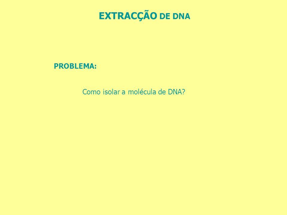 EXTRACÇÃO DE DNA PROBLEMA: Como isolar a molécula de DNA?