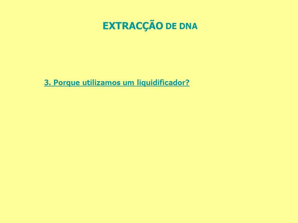 EXTRACÇÃO DE DNA 3. Porque utilizamos um liquidificador?