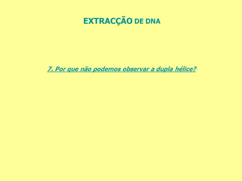 EXTRACÇÃO DE DNA 7. Por que não podemos observar a dupla hélice?