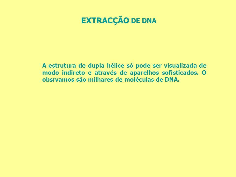 EXTRACÇÃO DE DNA A estrutura de dupla hélice só pode ser visualizada de modo indireto e através de aparelhos sofisticados. O obsrvamos são milhares de