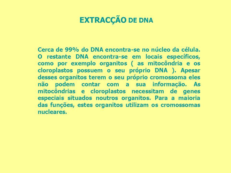 Cerca de 99% do DNA encontra-se no núcleo da célula. O restante DNA encontra-se em locais específicos, como por exemplo organitos ( as mitocôndria e o