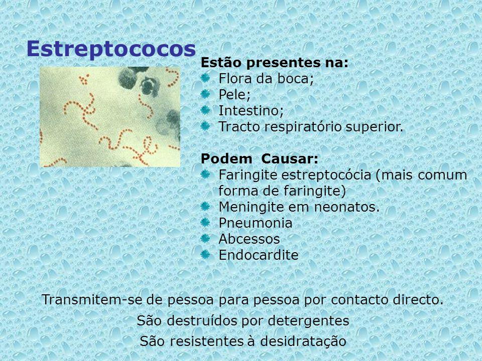 Estreptococos Estão presentes na: Flora da boca; Pele; Intestino; Tracto respiratório superior. Podem Causar: Faringite estreptocócia (mais comum form