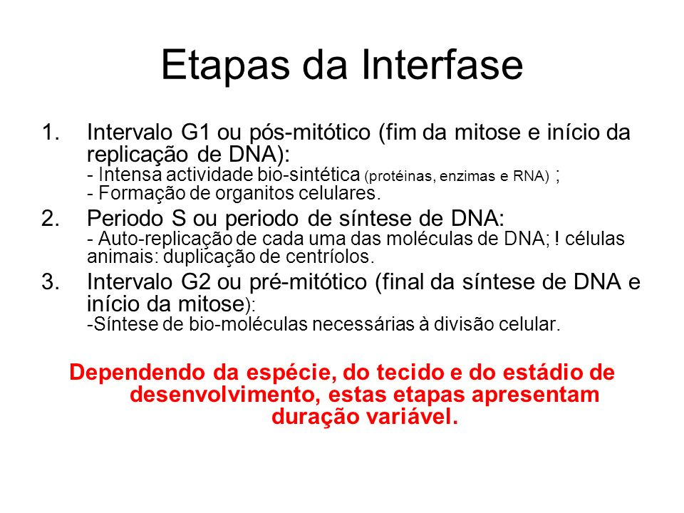 Etapas da Interfase 1.Intervalo G1 ou pós-mitótico (fim da mitose e início da replicação de DNA): - Intensa actividade bio-sintética (protéinas, enzim