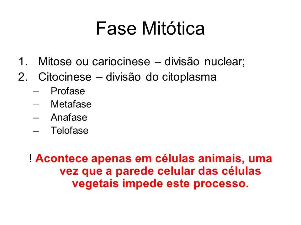 Fase Mitótica 1.Mitose ou cariocinese – divisão nuclear; 2.Citocinese – divisão do citoplasma –Profase –Metafase –Anafase –Telofase ! Acontece apenas