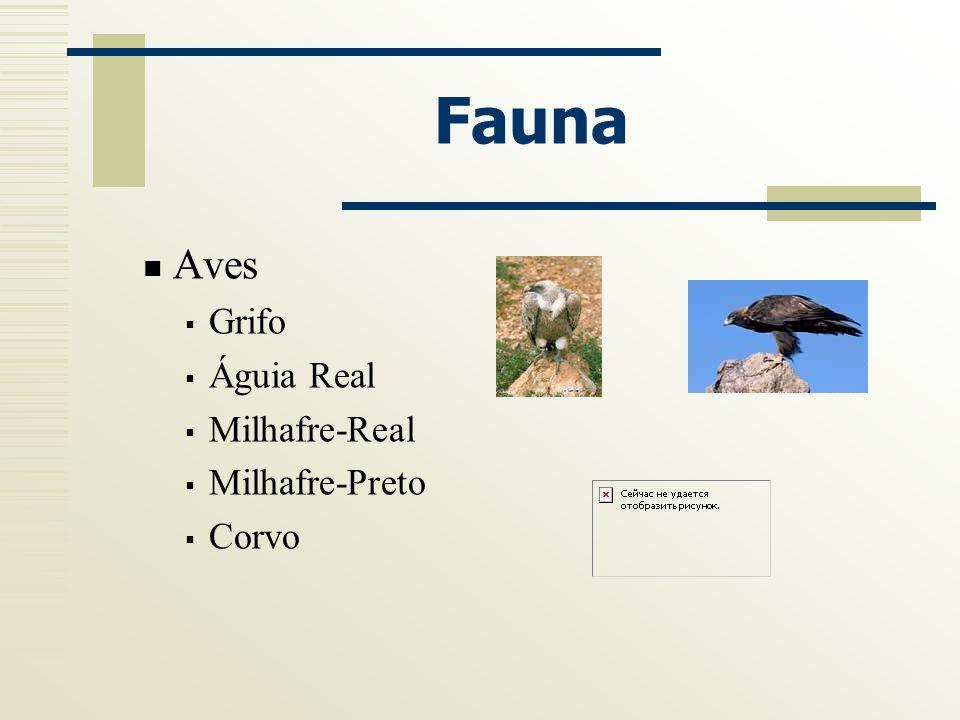 Fauna Aves Grifo Águia Real Milhafre-Real Milhafre-Preto Corvo