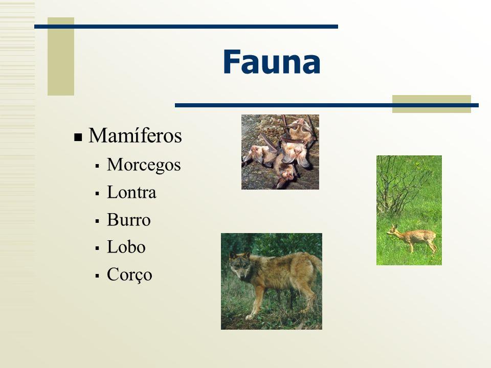 Fauna Mamíferos Morcegos Lontra Burro Lobo Corço