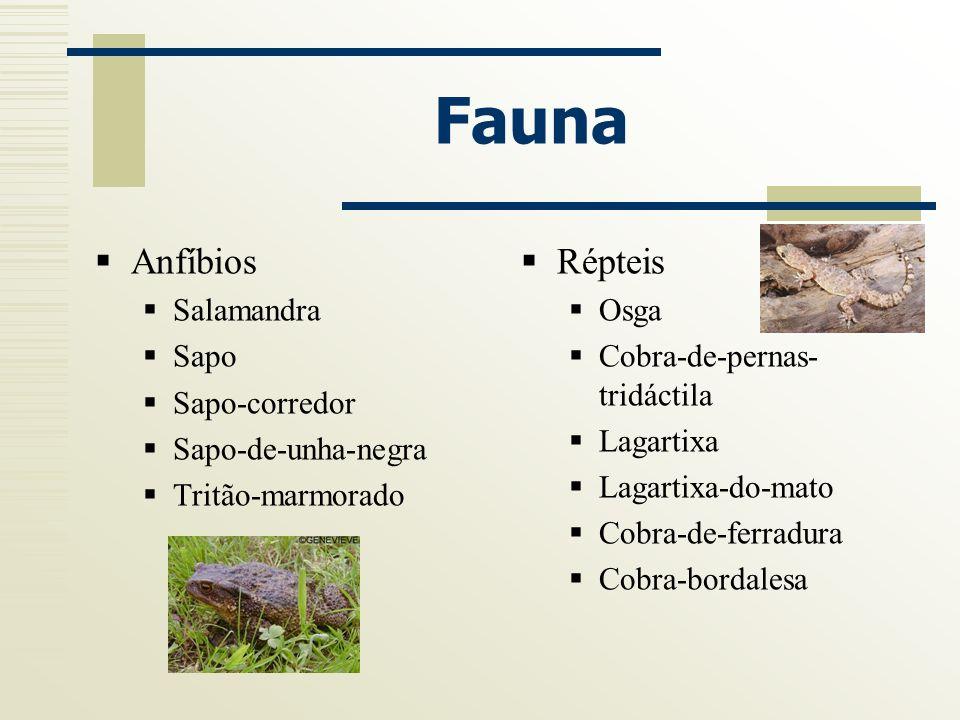 Fauna Anfíbios Salamandra Sapo Sapo-corredor Sapo-de-unha-negra Tritão-marmorado Répteis Osga Cobra-de-pernas- tridáctila Lagartixa Lagartixa-do-mato