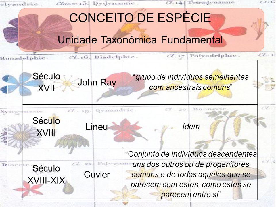 CONCEITO DE ESPÉCIE Unidade Taxonómica Fundamental Século XVII John Ray grupo de indivíduos semelhantes com ancestrais comuns Século XVIII Lineu Idem