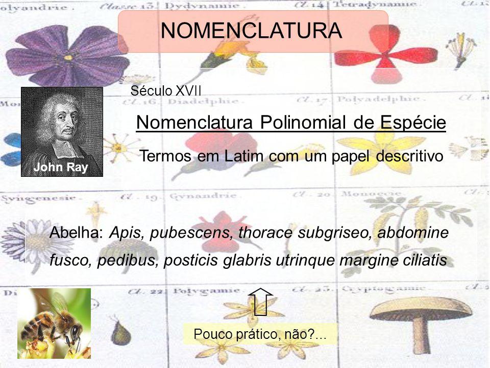 NOMENCLATURA John Ray Século XVII Nomenclatura Polinomial de Espécie Termos em Latim com um papel descritivo Abelha: Apis, pubescens, thorace subgrise