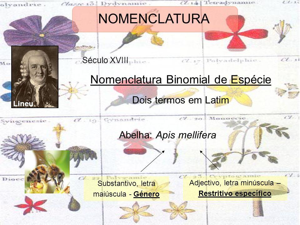 Lineu Século XVIII Nomenclatura Binomial de Espécie Dois termos em Latim Abelha: Apis mellifera Substantivo, letra maiúscula - Género Adjectivo, letra