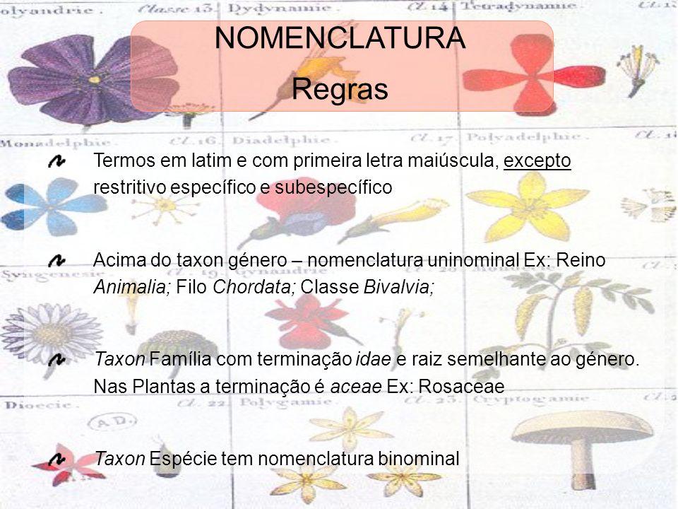 Regras Termos em latim e com primeira letra maiúscula, excepto restritivo específico e subespecífico Acima do taxon género – nomenclatura uninominal E