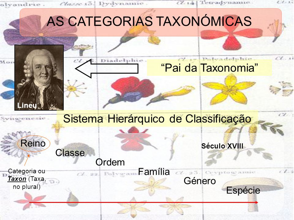 Lineu Pai da Taxonomia Sistema Hierárquico de Classificação Reino Classe Ordem Família Género Espécie Século XVIII Categoria ou Taxon (Taxa, no plural