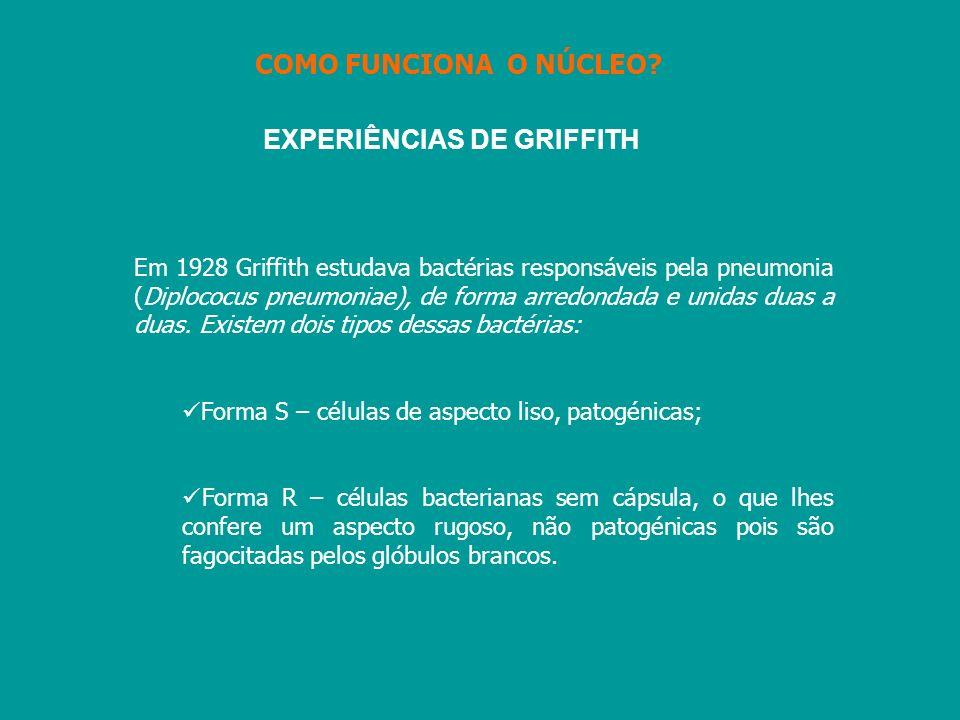Em 1928 Griffith estudava bactérias responsáveis pela pneumonia (Diplococus pneumoniae), de forma arredondada e unidas duas a duas. Existem dois tipos