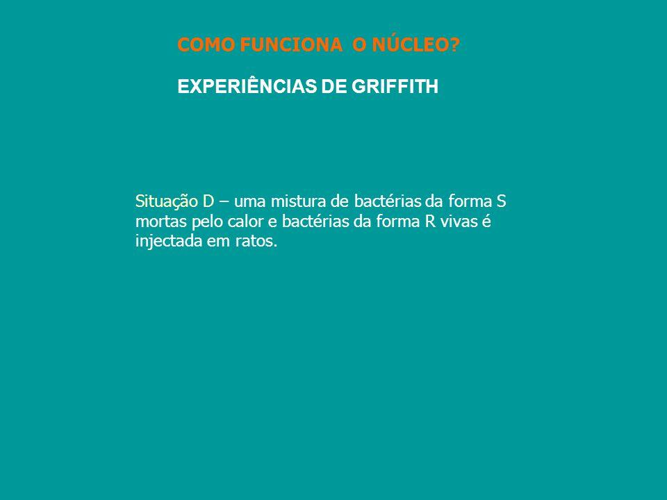 EXPERIÊNCIAS DE GRIFFITH Situação D – uma mistura de bactérias da forma S mortas pelo calor e bactérias da forma R vivas é injectada em ratos. COMO FU