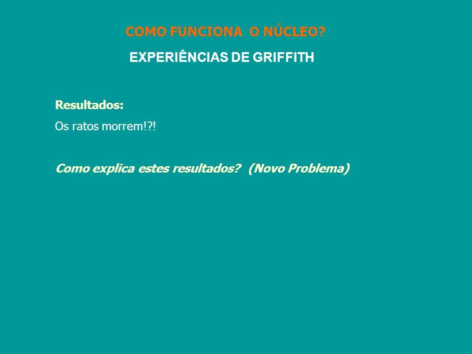 EXPERIÊNCIAS DE GRIFFITH Resultados: Os ratos morrem!?! Como explica estes resultados? (Novo Problema) COMO FUNCIONA O NÚCLEO?