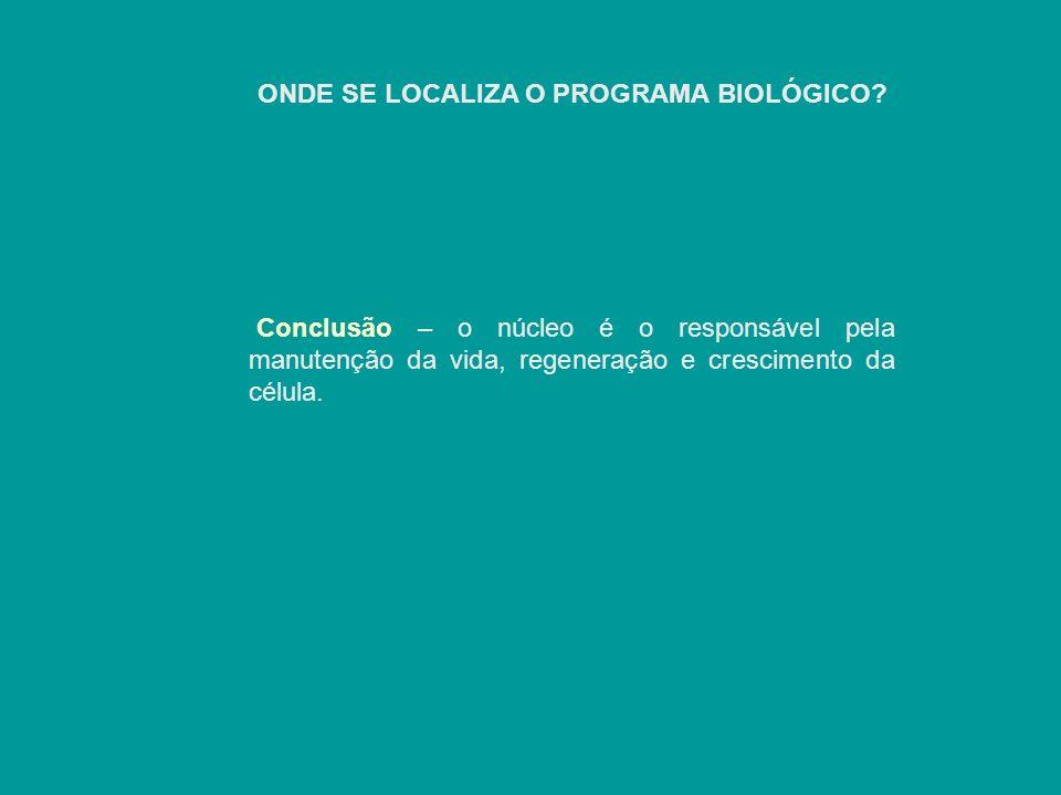 Conclusão – o núcleo é o responsável pela manutenção da vida, regeneração e crescimento da célula.