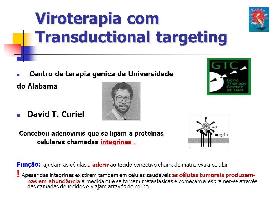 Centro de terapia genica da Universidade do Alabama David T. Curiel Concebeu adenovirus que se ligam a proteínas celulares chamadas integrinas. Função