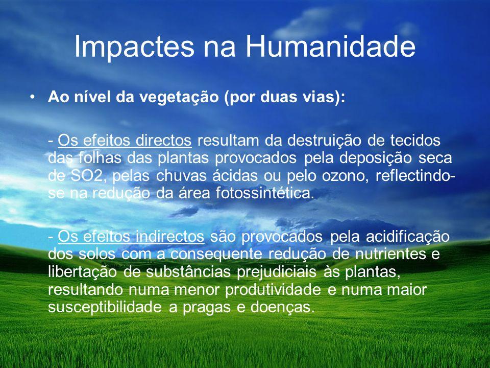 Impactes na Humanidade Ao nível da vegetação (por duas vias): - Os efeitos directos resultam da destruição de tecidos das folhas das plantas provocados pela deposição seca de SO2, pelas chuvas ácidas ou pelo ozono, reflectindo- se na redução da área fotossintética.