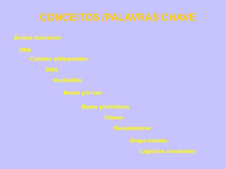 CONCEITOS /PALAVRAS CHAVE Ácidos Nucleicos RNA DNA Nucleótido Bases púricas Bases pirimídicas Ribose Grupo fosfato Ligações covalentes Cadeias antipar