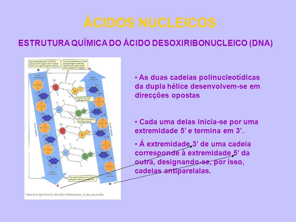 ÁCIDOS NUCLEICOS ESTRUTURA QUÍMICA DO ÁCIDO DESOXIRIBONUCLEICO (DNA) As duas cadeias polinucleotídicas da dupla hélice desenvolvem-se em direcções opo