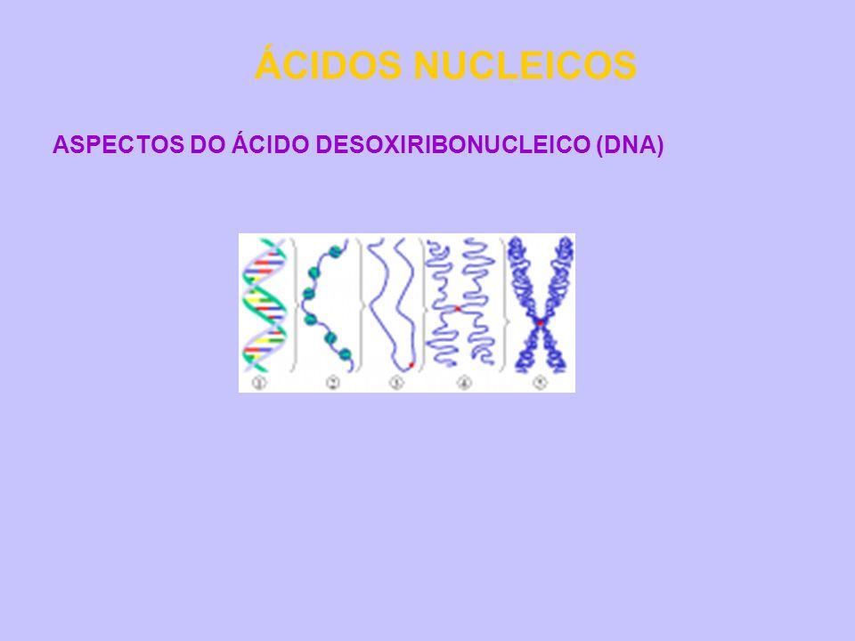 ÁCIDOS NUCLEICOS ASPECTOS DO ÁCIDO DESOXIRIBONUCLEICO (DNA)