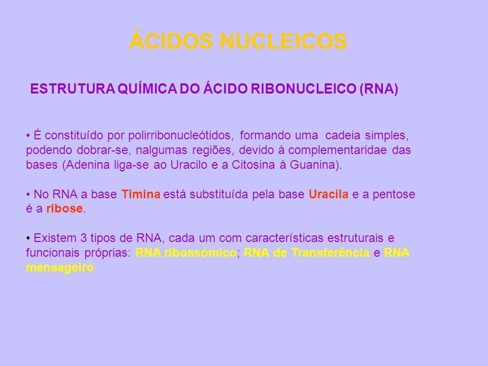 ÁCIDOS NUCLEICOS ESTRUTURA QUÍMICA DO ÁCIDO RIBONUCLEICO (RNA) É constituído por polirribonucleótidos, formando uma cadeia simples, podendo dobrar-se,