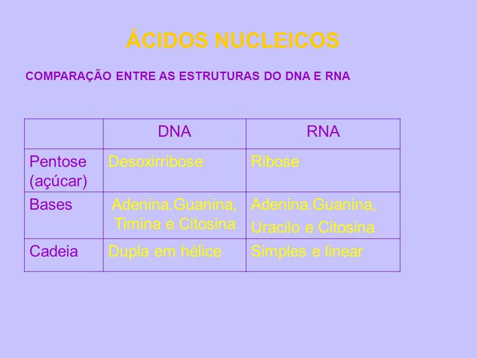 ÁCIDOS NUCLEICOS DNARNA Pentose (açúcar) DesoxirriboseRibose BasesAdenina.Guanina, Timina e Citosina Adenina.Guanina, Uracilo e Citosina CadeiaDupla e