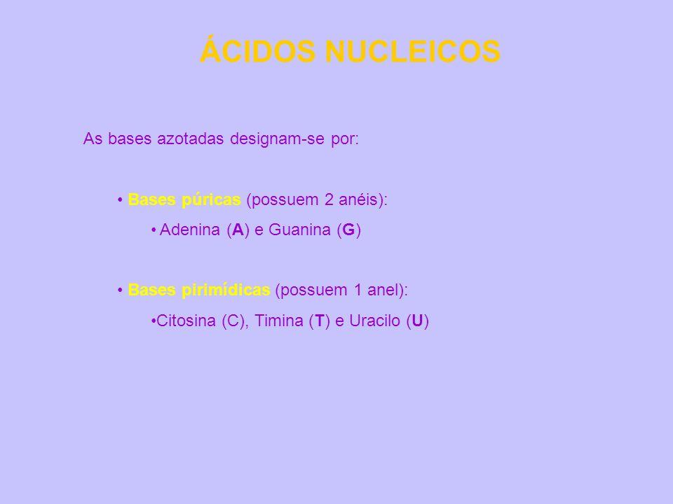 ÁCIDOS NUCLEICOS As bases azotadas designam-se por: Bases púricas (possuem 2 anéis): Adenina (A) e Guanina (G) Bases pirimídicas (possuem 1 anel): Cit