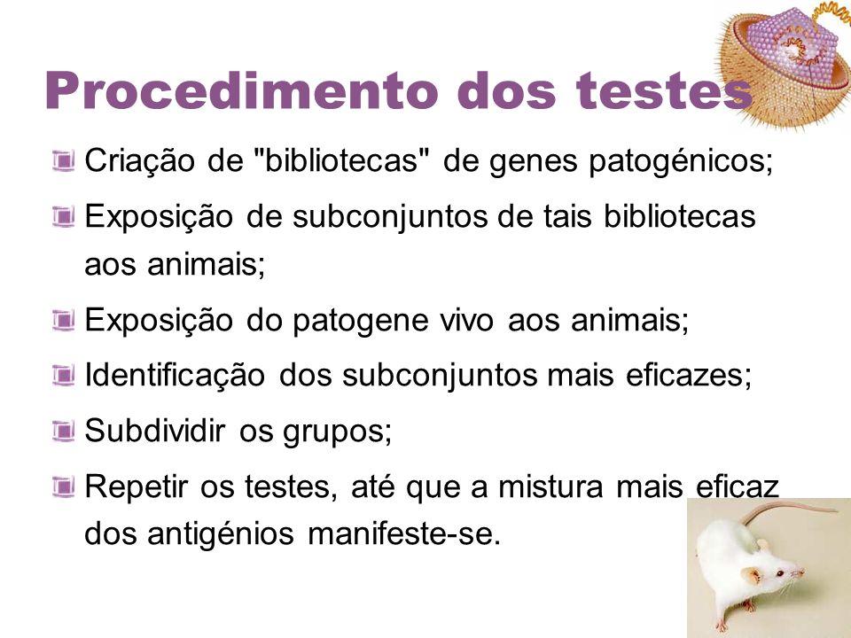 Procedimento dos testes Criação de