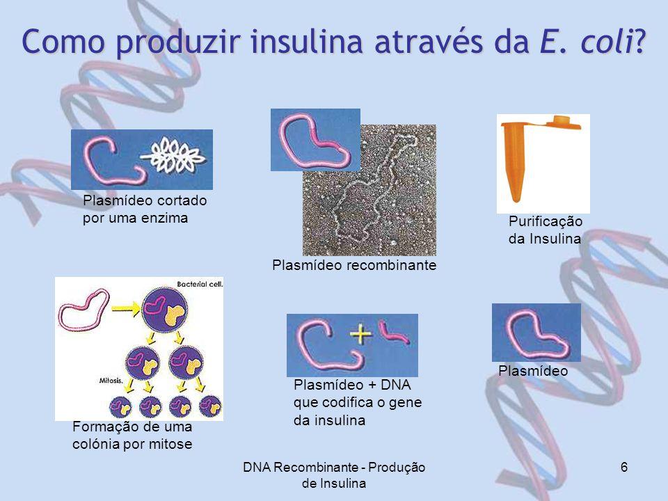 DNA Recombinante - Produção de Insulina 6 Como produzir insulina através da E.
