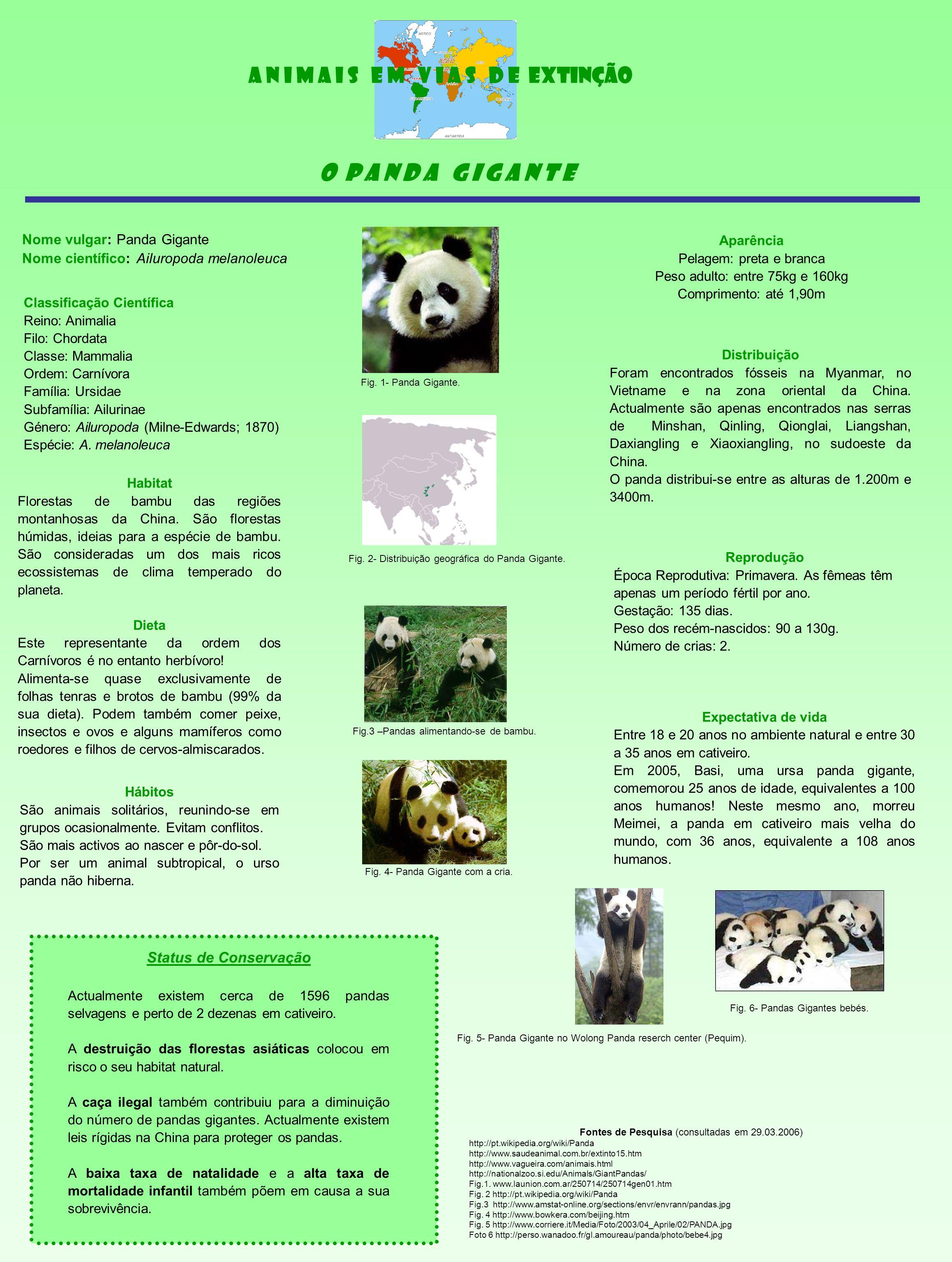 Nome vulgar: Panda Gigante Nome científico: Ailuropoda melanoleuca Distribuição Foram encontrados fósseis na Myanmar, no Vietname e na zona oriental da China.