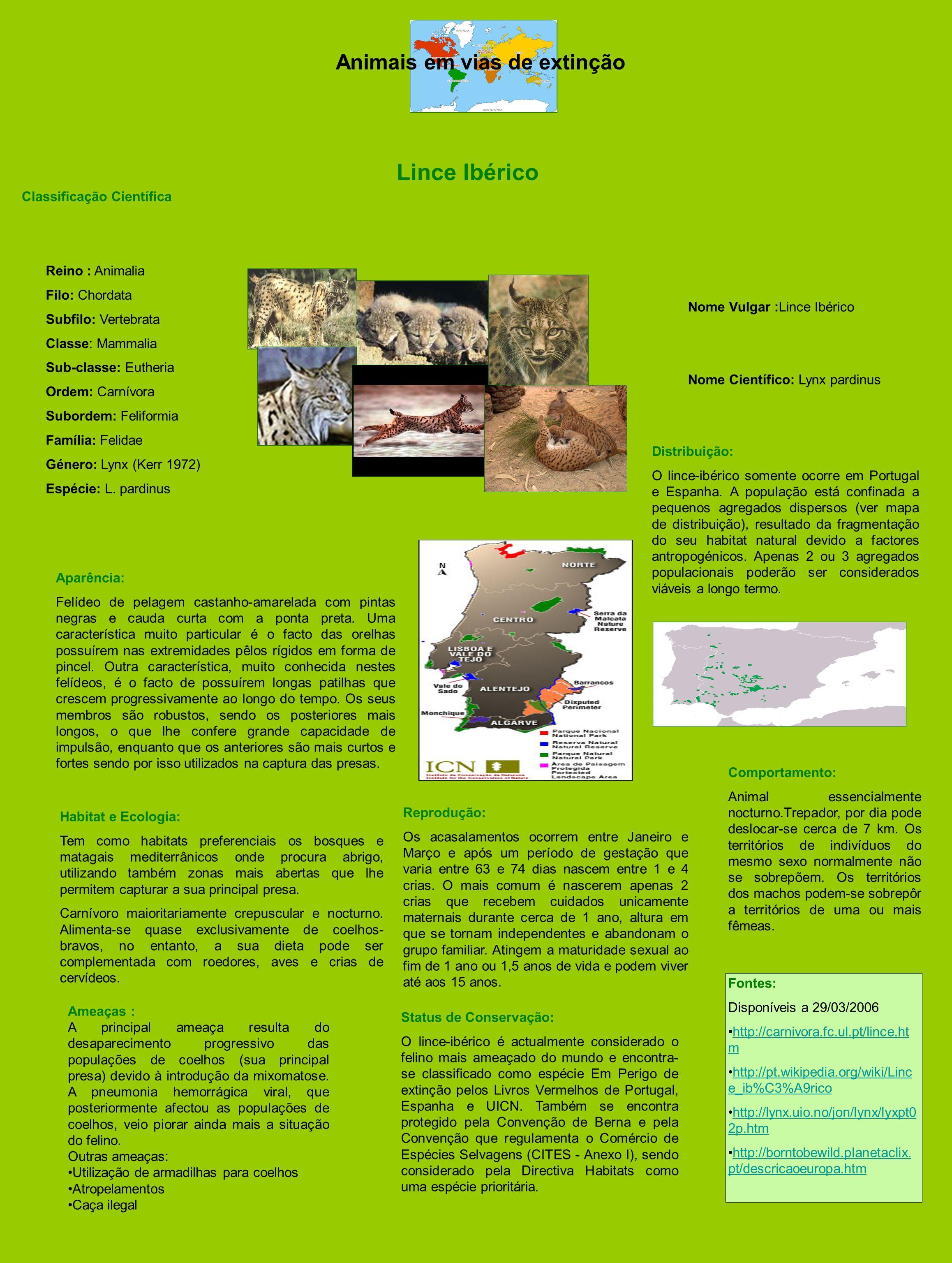 Animais em vias de extinção Lince Ibérico Classificação Científica Reino : Animalia Filo: Chordata Subfilo: Vertebrata Classe: Mammalia Sub-classe: Eu