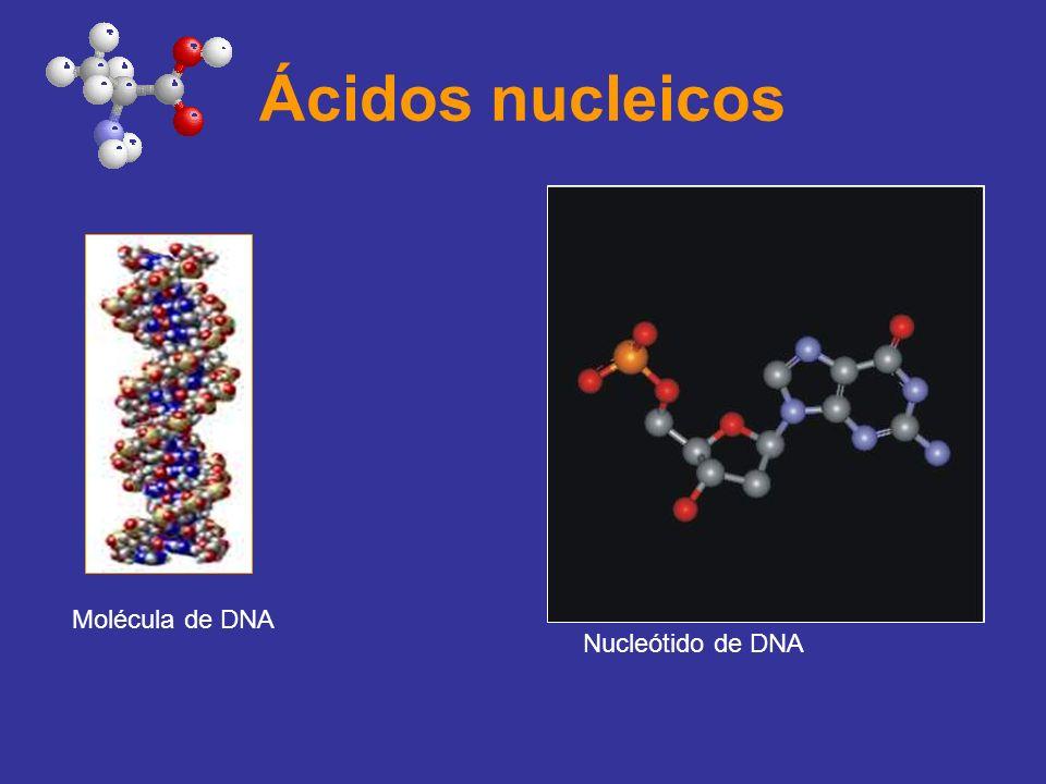 Ácidos nucleicos Molécula de DNA Nucleótido de DNA