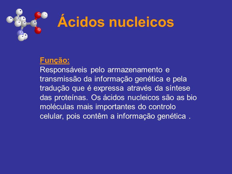 Ácidos nucleicos Função: Responsáveis pelo armazenamento e transmissão da informação genética e pela tradução que é expressa através da síntese das pr