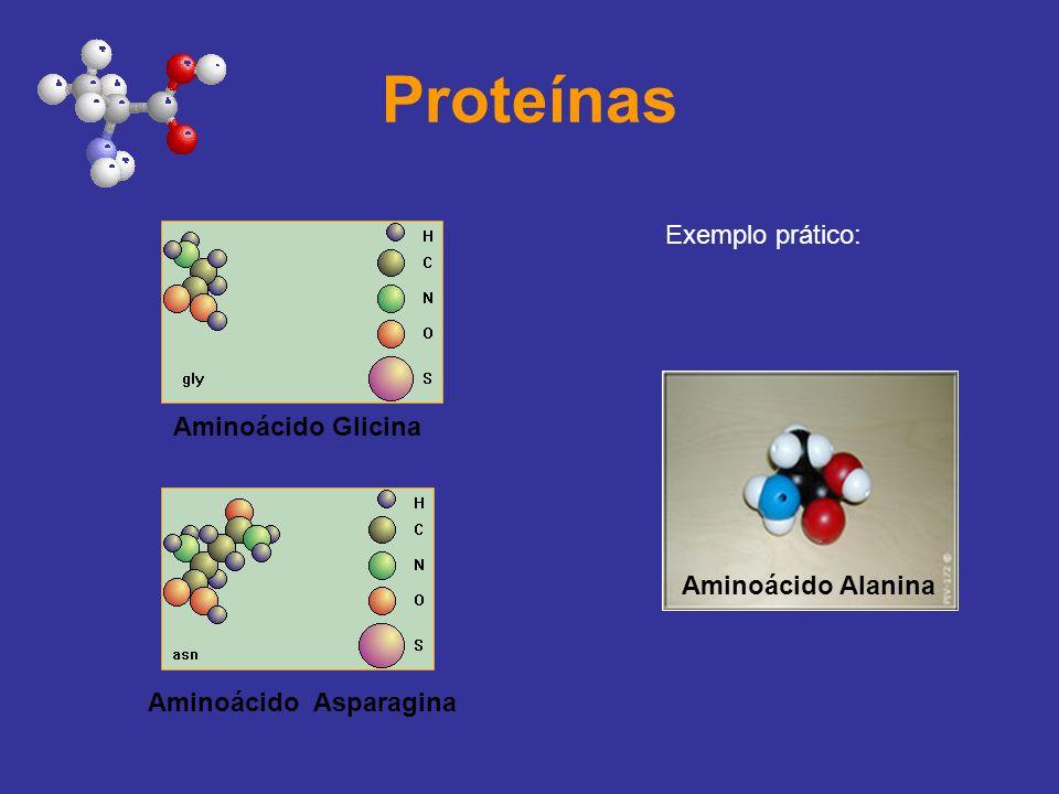 Proteínas Exemplo prático: Aminoácido Alanina Aminoácido Glicina Aminoácido Asparagina