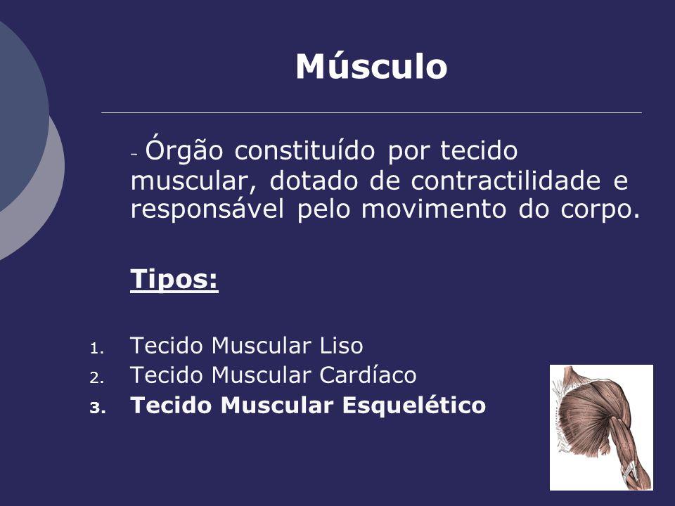 Músculo - Órgão constituído por tecido muscular, dotado de contractilidade e responsável pelo movimento do corpo. Tipos: 1. Tecido Muscular Liso 2. Te