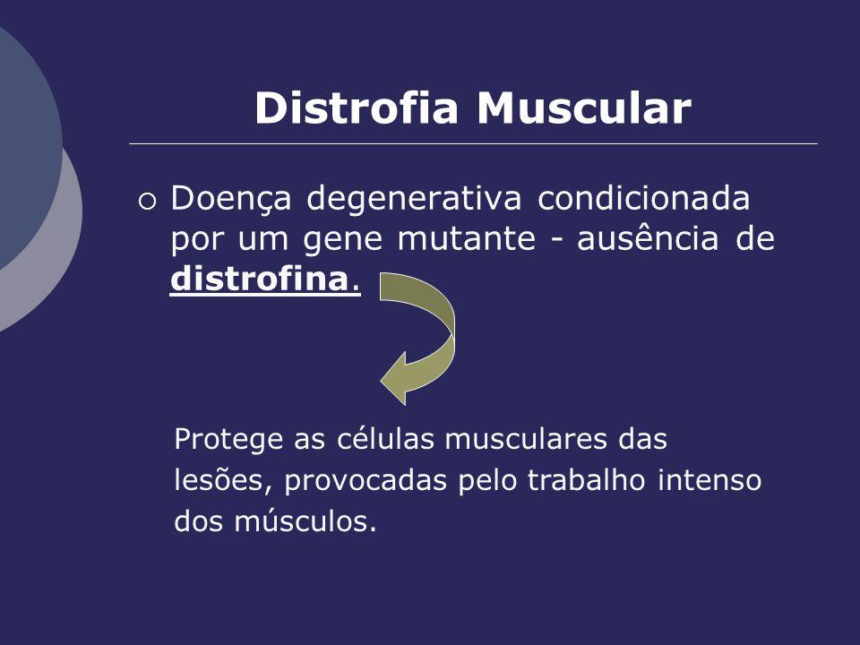 Distrofia Muscular Doença degenerativa condicionada por um gene mutante - ausência de distrofina. Protege as células musculares das lesões, provocadas