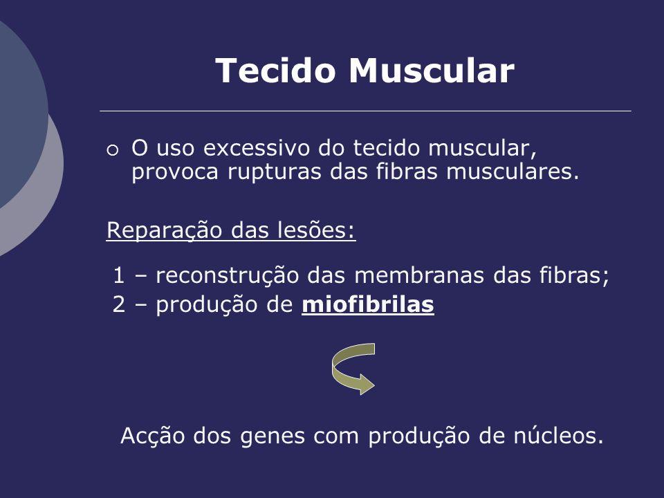 Tecido Muscular O uso excessivo do tecido muscular, provoca rupturas das fibras musculares. Reparação das lesões: Acção dos genes com produção de núcl