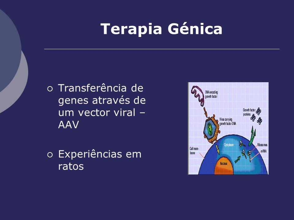 Terapia Génica Transferência de genes através de um vector viral – AAV Experiências em ratos