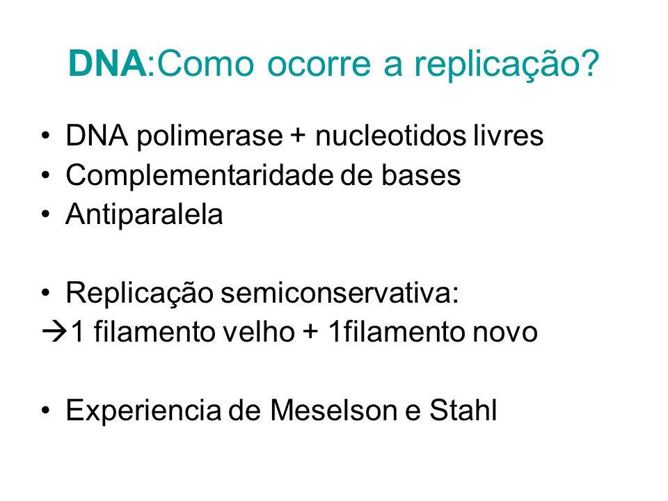 DNA:Como ocorre a replicação? DNA polimerase + nucleotidos livres Complementaridade de bases Antiparalela Replicação semiconservativa: 1 filamento vel