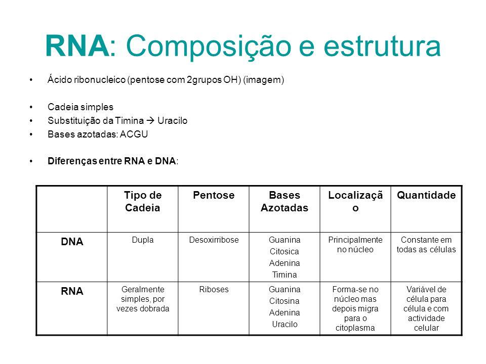 RNA: Composição e estrutura Ácido ribonucleico (pentose com 2grupos OH) (imagem) Cadeia simples Substituição da Timina Uracilo Bases azotadas: ACGU Di