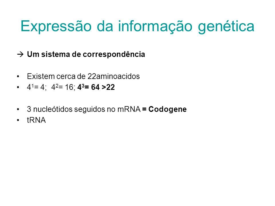 Um sistema de correspondência Existem cerca de 22aminoacidos 4 1 = 4; 4 2 = 16; 4 3 = 64 >22 3 nucleótidos seguidos no mRNA = Codogene tRNA Expressão